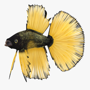 betta fish rigged 3d max