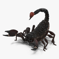 black scorpion rigged 3d max