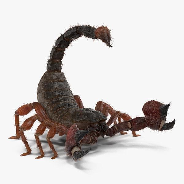 scorpion rigged fur 3d max