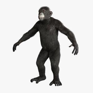 chimpanzee fur 3d obj