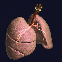Lungs Pro Animated Textured BM