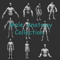 male anatomy obj