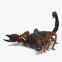 Scorpion with Fur 3D Model