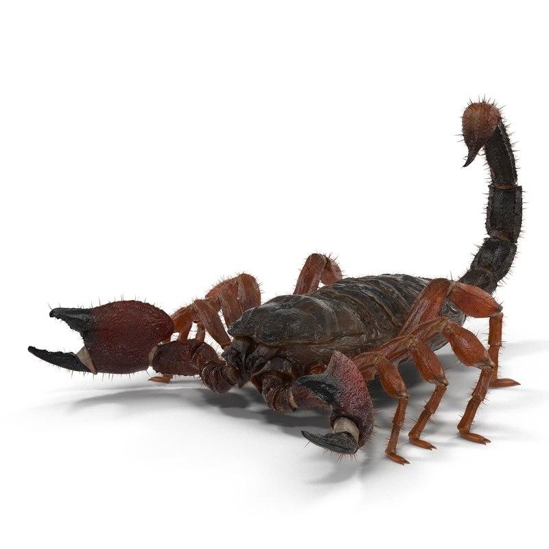 3d scorpion fur