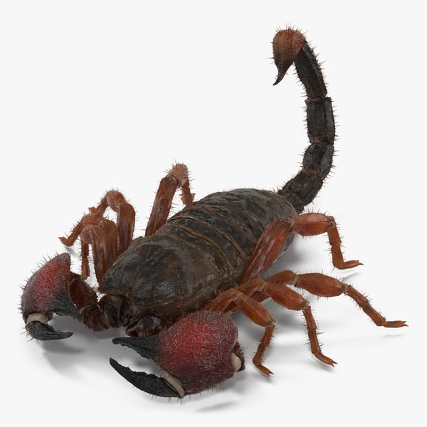 scorpion pose 3 fur 3d max