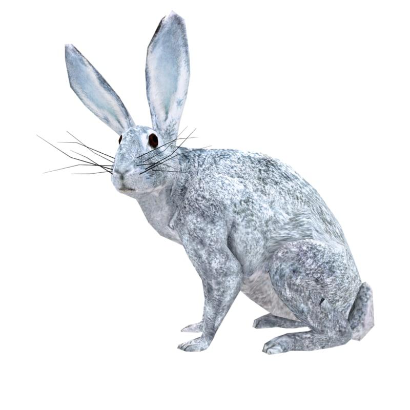 3d x realistic rabbit animation