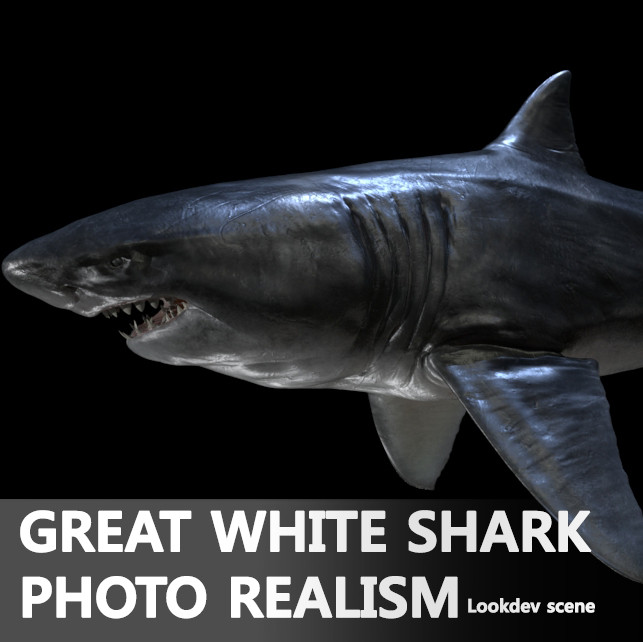 great white shark 3d ma
