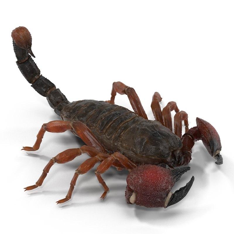 3d model scorpion pose 3