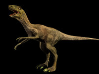 3d velociraptor raptor