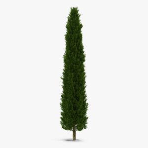 3d cypress tree 2 model