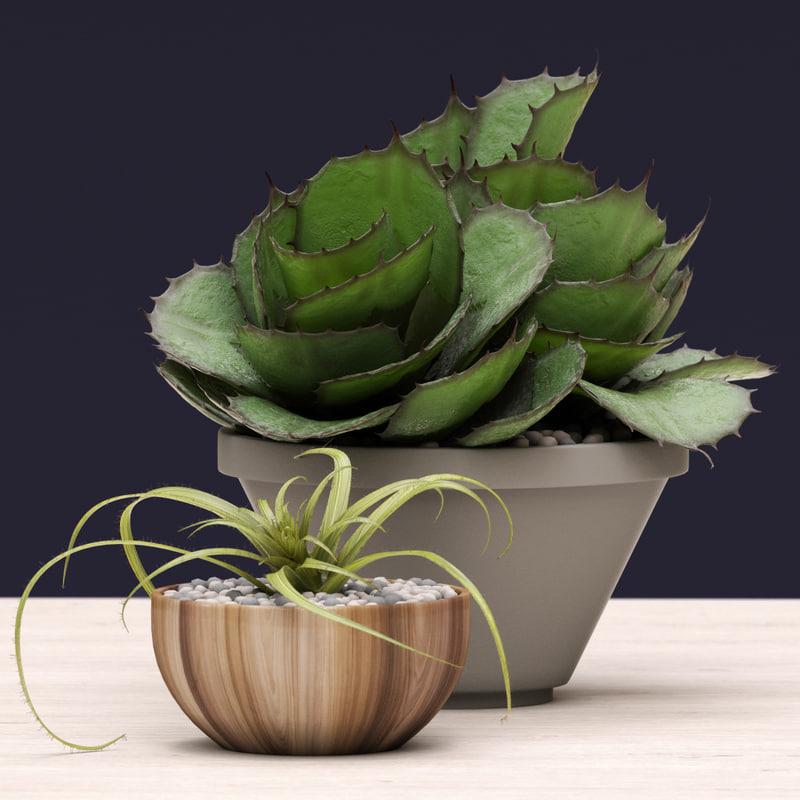 succulent agave 3d obj