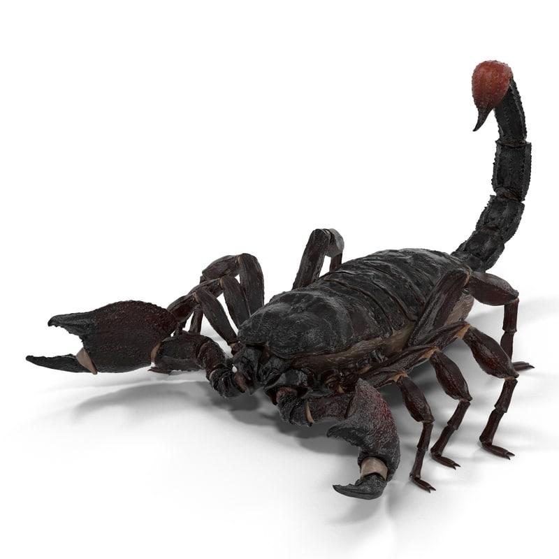 black scorpion 3d obj