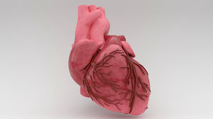 human heart 3ds