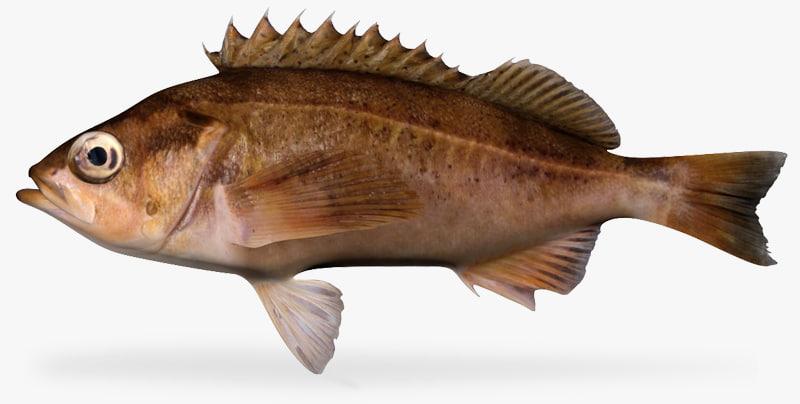 speckled rockfish fbx
