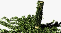 3d vines grow