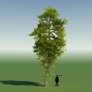 tree japanese pine 3d max