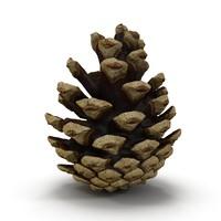Pine Cone Open