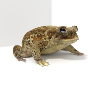 realistic toad 3d model