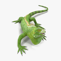 3d model of green iguana rigged