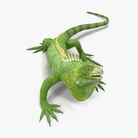 3d model of green iguana rigged