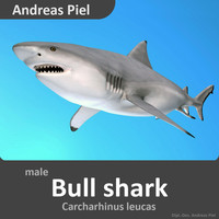 realistic male bull shark 3d model