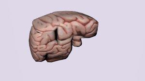 organ brain 3d fbx