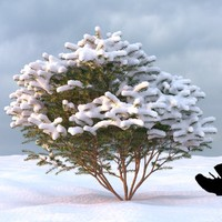 3d model winter tree