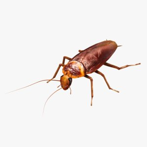 3d model rigged cockroach