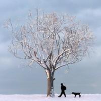 winter tree 3d max