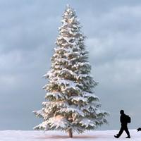 Winter Tree 07