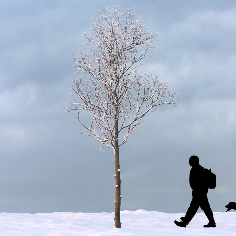 3d model winter tree