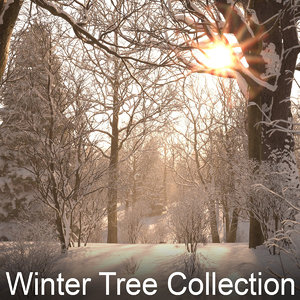 3d winter trees model