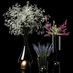 3d gypsophila dry flowers plants