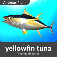 3d realistic yellowfin tuna model