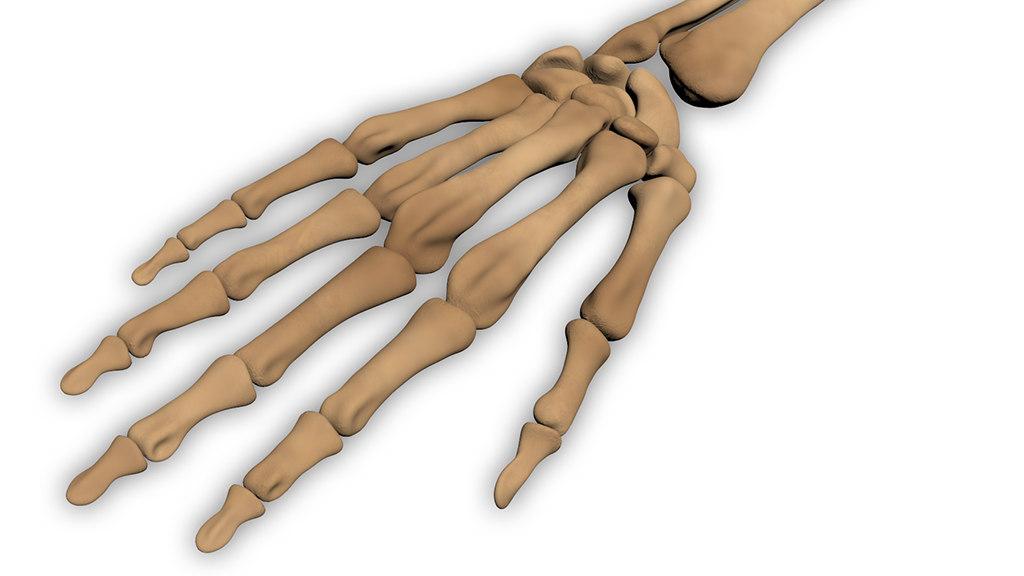 3d Human Hand Bones Model