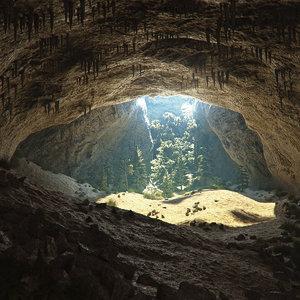cave conifers max