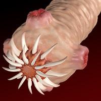 worm scolex 3d model