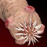 3d worm scolex model