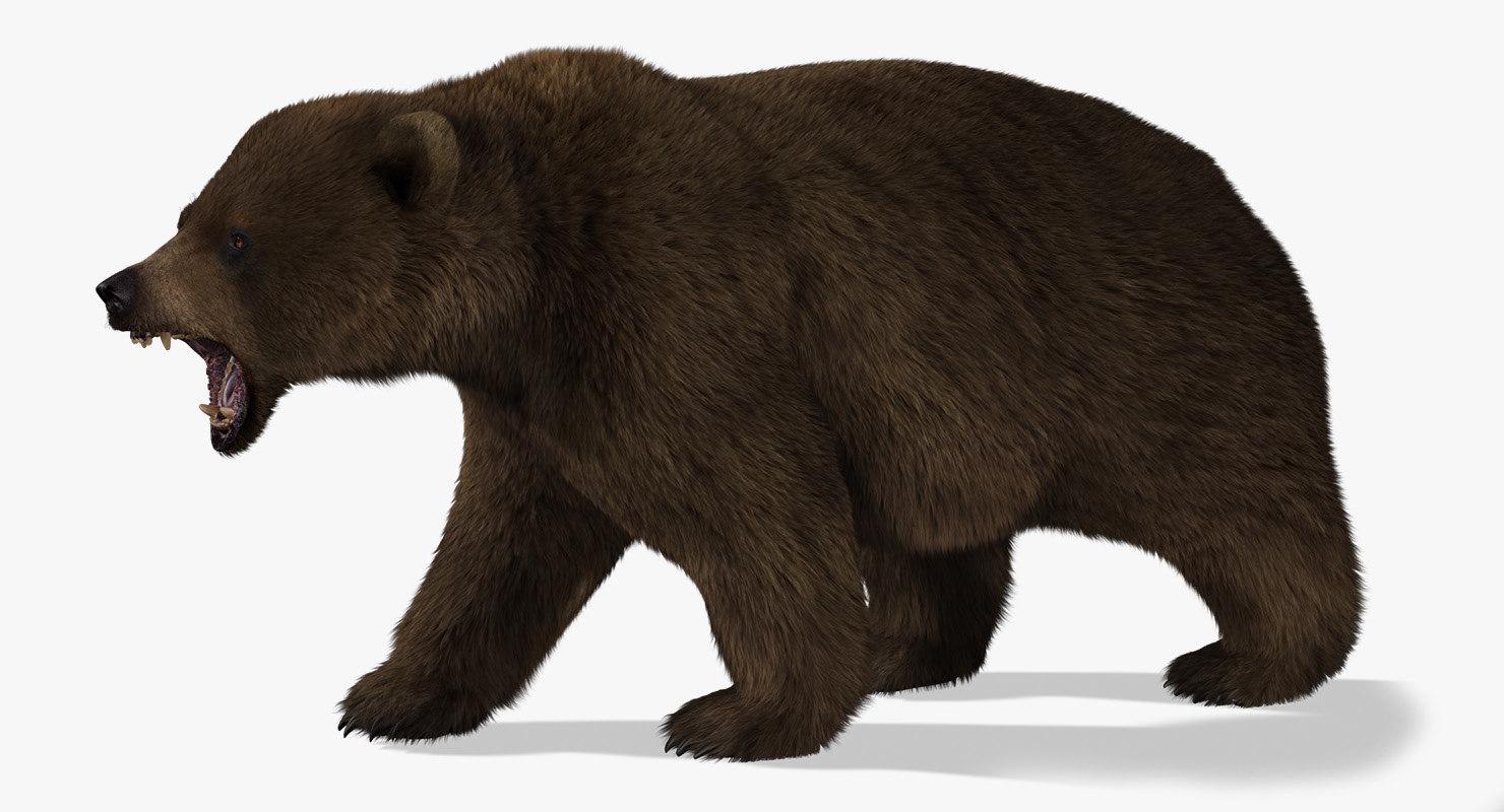 3d model of bear rigged 2 fur