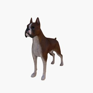 max boxer dog