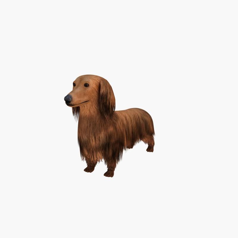 dachshund x