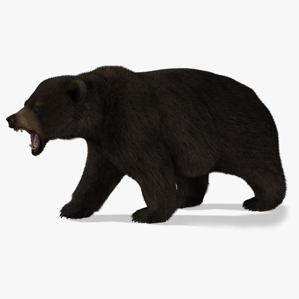 3d bear rigged 2 fur