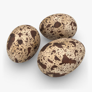 3d model realistic quail eggs