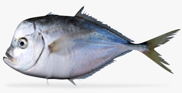 3d model pacific moonfish