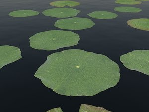 water lily pads 3d max