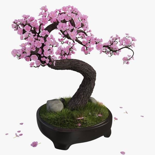Sakura Bonsai Tree 3d Max