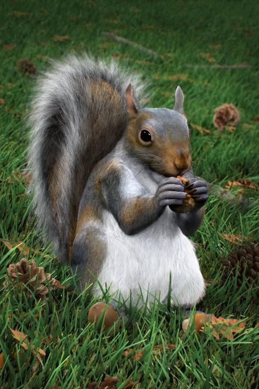 3d squirrel modelled modo model