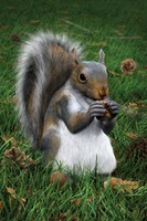 Squirrel(1)