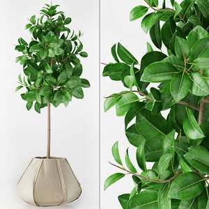 3d model of ficus elastica