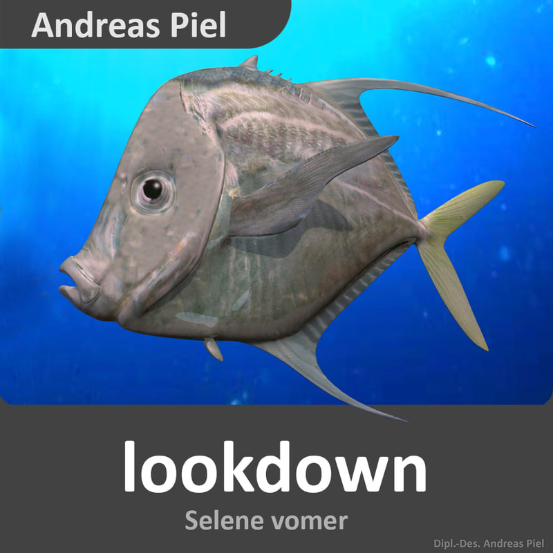 3d lookdown fish model